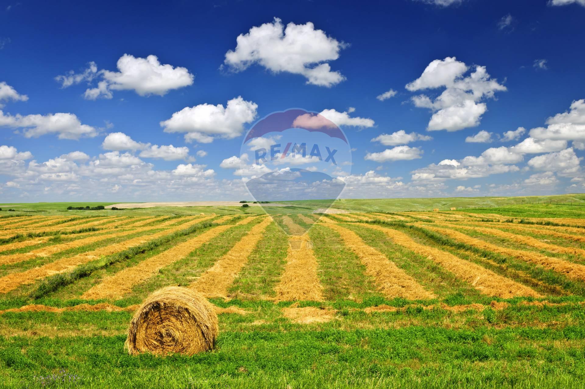 Terreno Agricolo in Vendita a L'Aquila